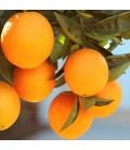 Appelsin marmelade - Beirabaga
