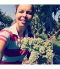 6 x Areal Vinho Verde - Quinta da Pousada