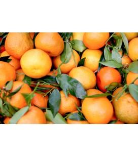 DELUXE Klementiner (4 kg)