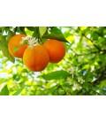Orange Blossom Gin - Sharish Limited edition