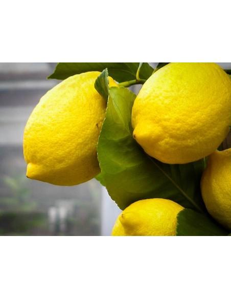 DELUXE Citroner (4,5 kg)